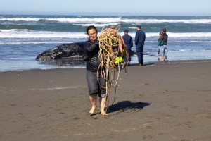 Kat Meyer from the California Department of Fish and Game carries away the ropes that were entangled a whale on Samoa Beach on October 23. | Photo by Thomas Lal