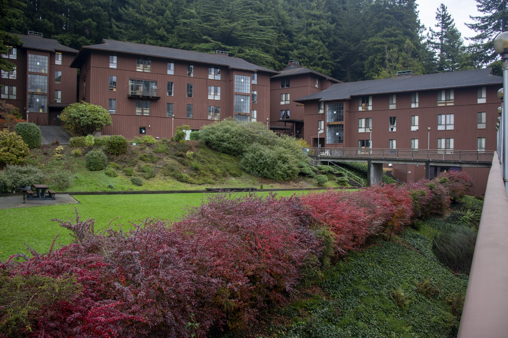 The Madrone, Maple, Tan Oak and Pepperwood dorms on Nov. 17 | Photo by Dakota Cox