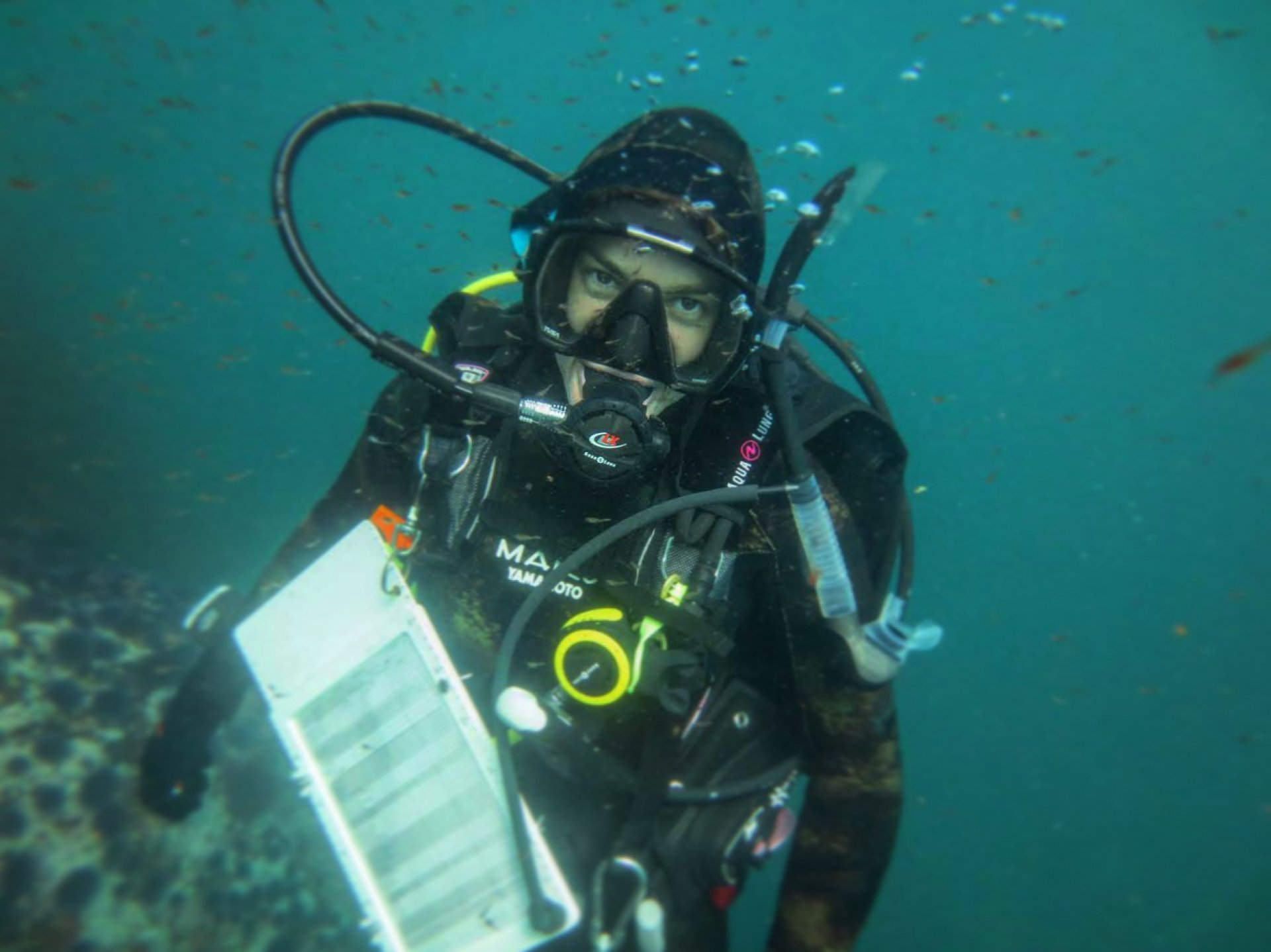 Angela Edmunds on a scientific dive in Mendocino County. | Photo by Hanna Johnston