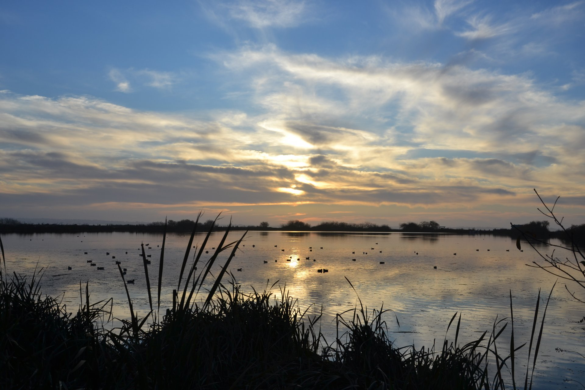 Shoebirds foraging on the Humboldt Bay mudflats at sunset on Dec. 1, 2020   Photo by Jen Kelly