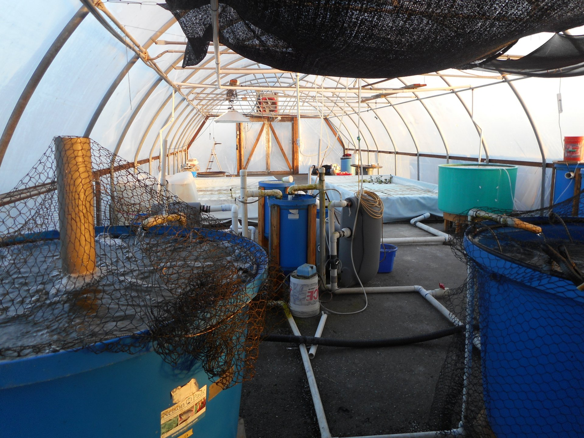 HSU Samoa aquaponics facility preparing to plant a spring garden. Photo by Tyrone McDonald.