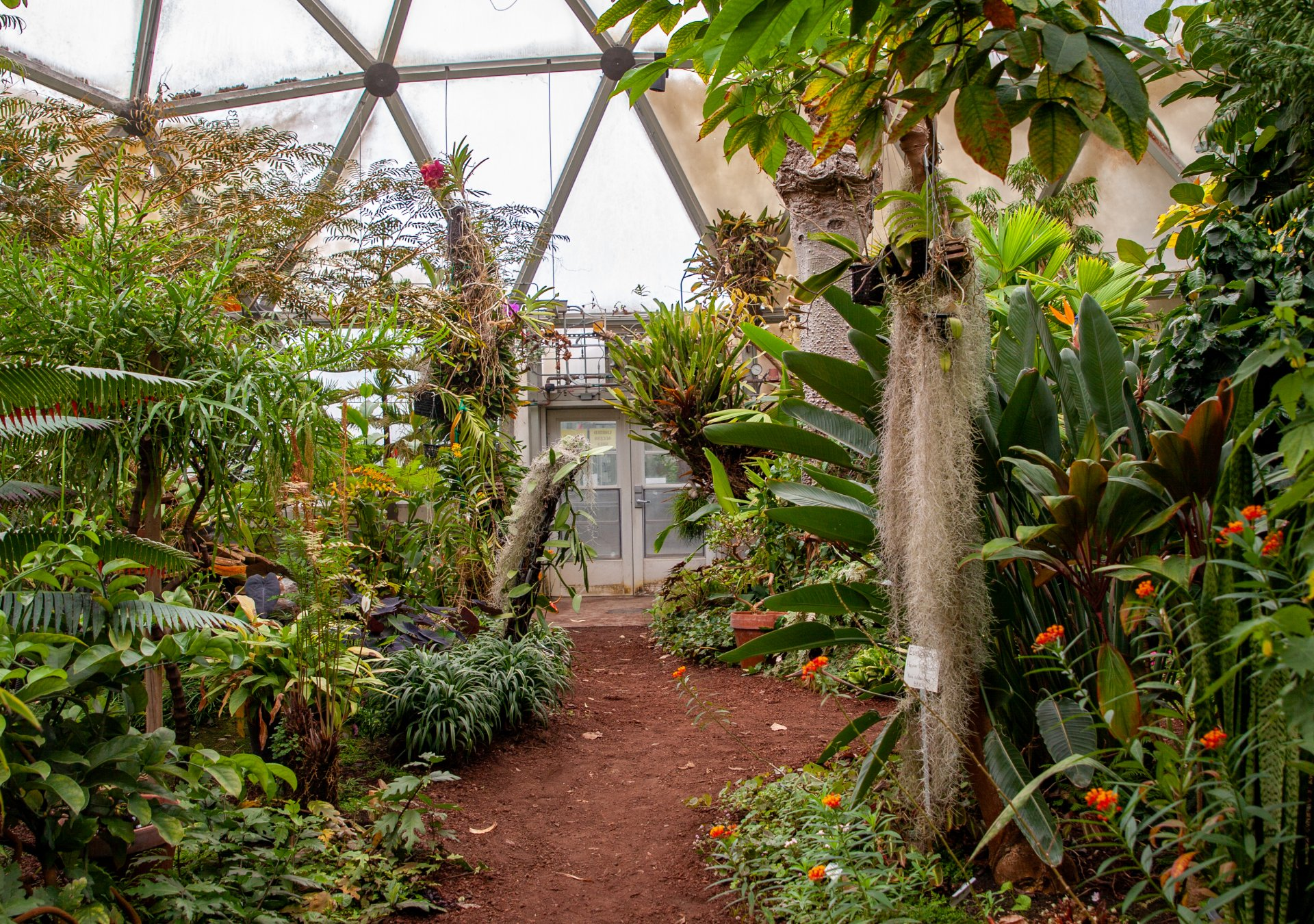 Inside the Subtropical Dome at the Dennis K. Walker Greenhouse at Humboldt State University. | Photo by Deija Zavala