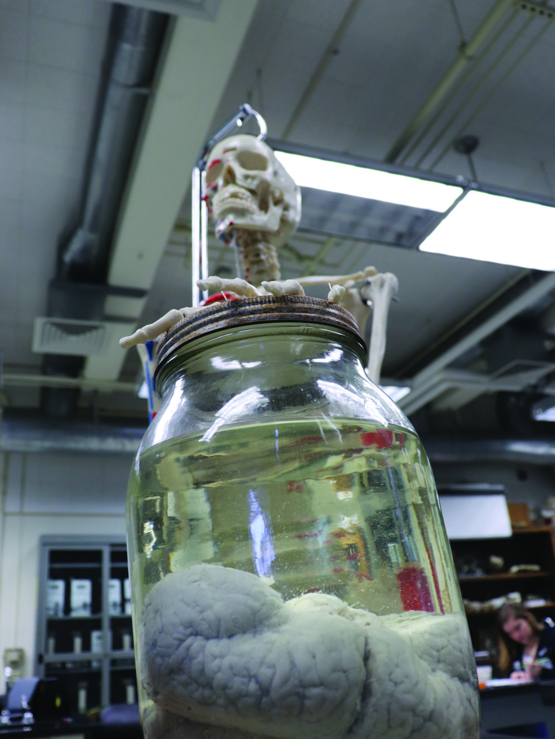 Skeleton holds a jar of tortoise brains. | Photo by Freddy Brewster