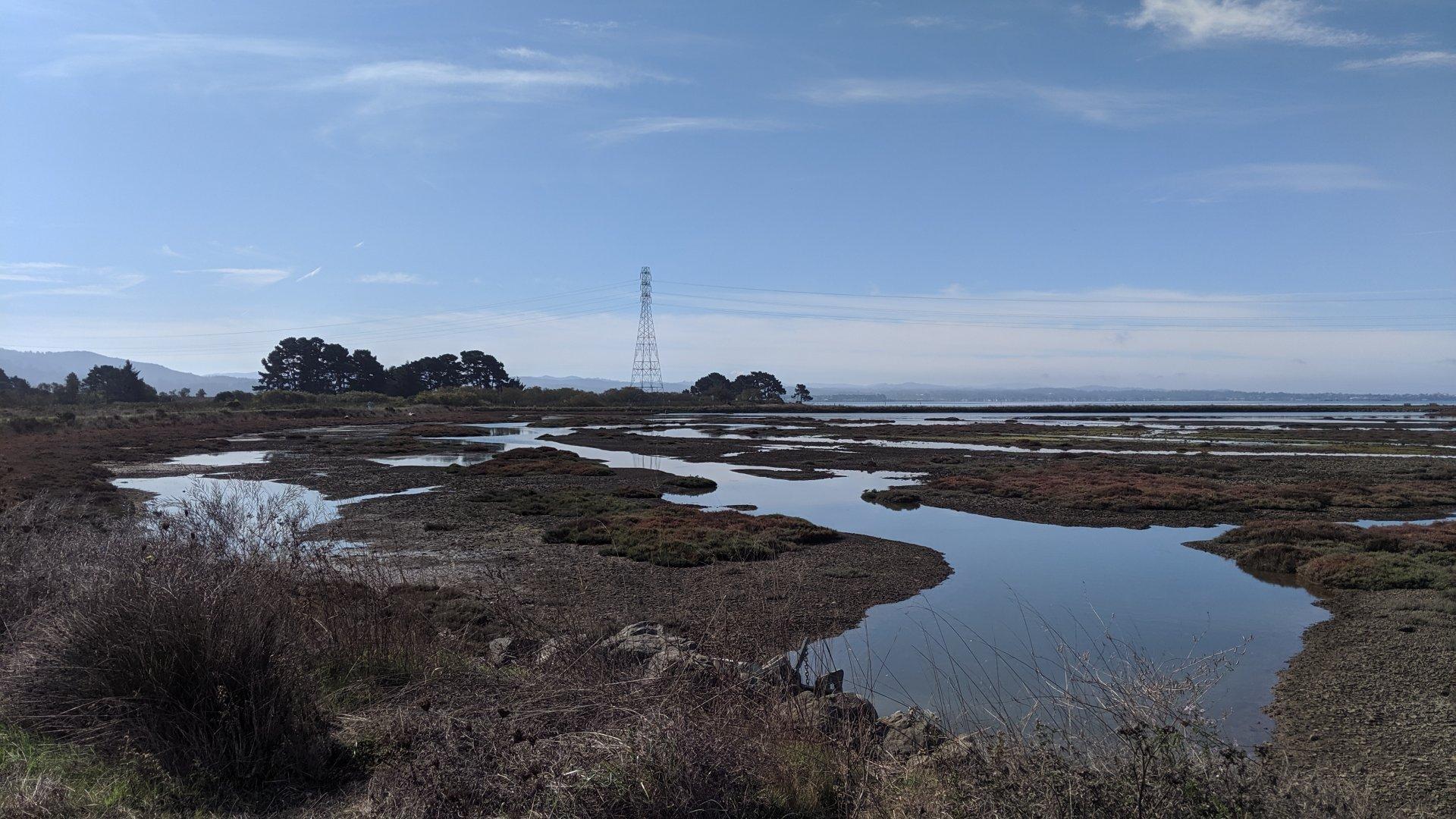 Arcata Marsh. | Photo by Jett Williams