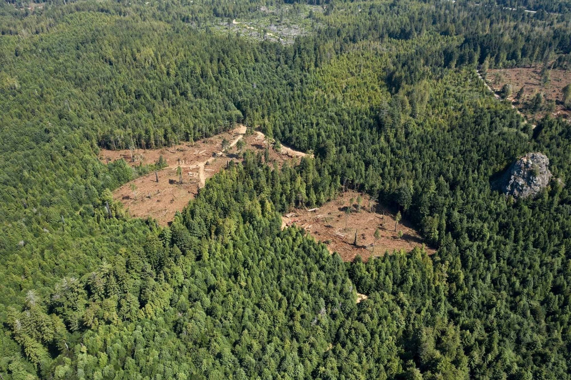 Strawberry Rock, Trinidad, on the right of two clear cuts executed this summer by Green Diamond Resource Company. | Photo courtesy of Redwood Forest Defenders