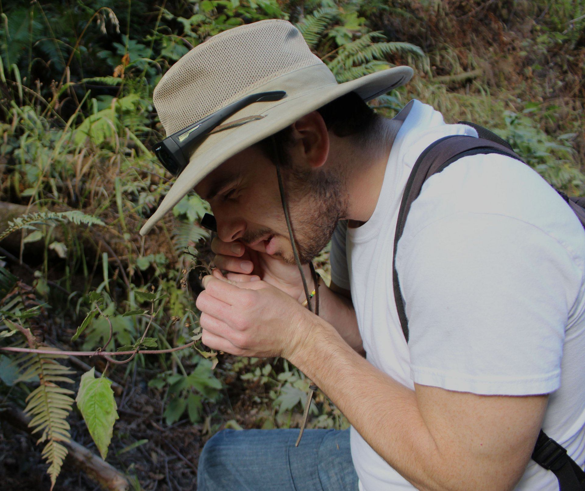 Matthew Pedrotti uses a hand lens to look at the orientation of flowers to determine the species in the Arcata Community Forest. | Photo by Walter Hackett