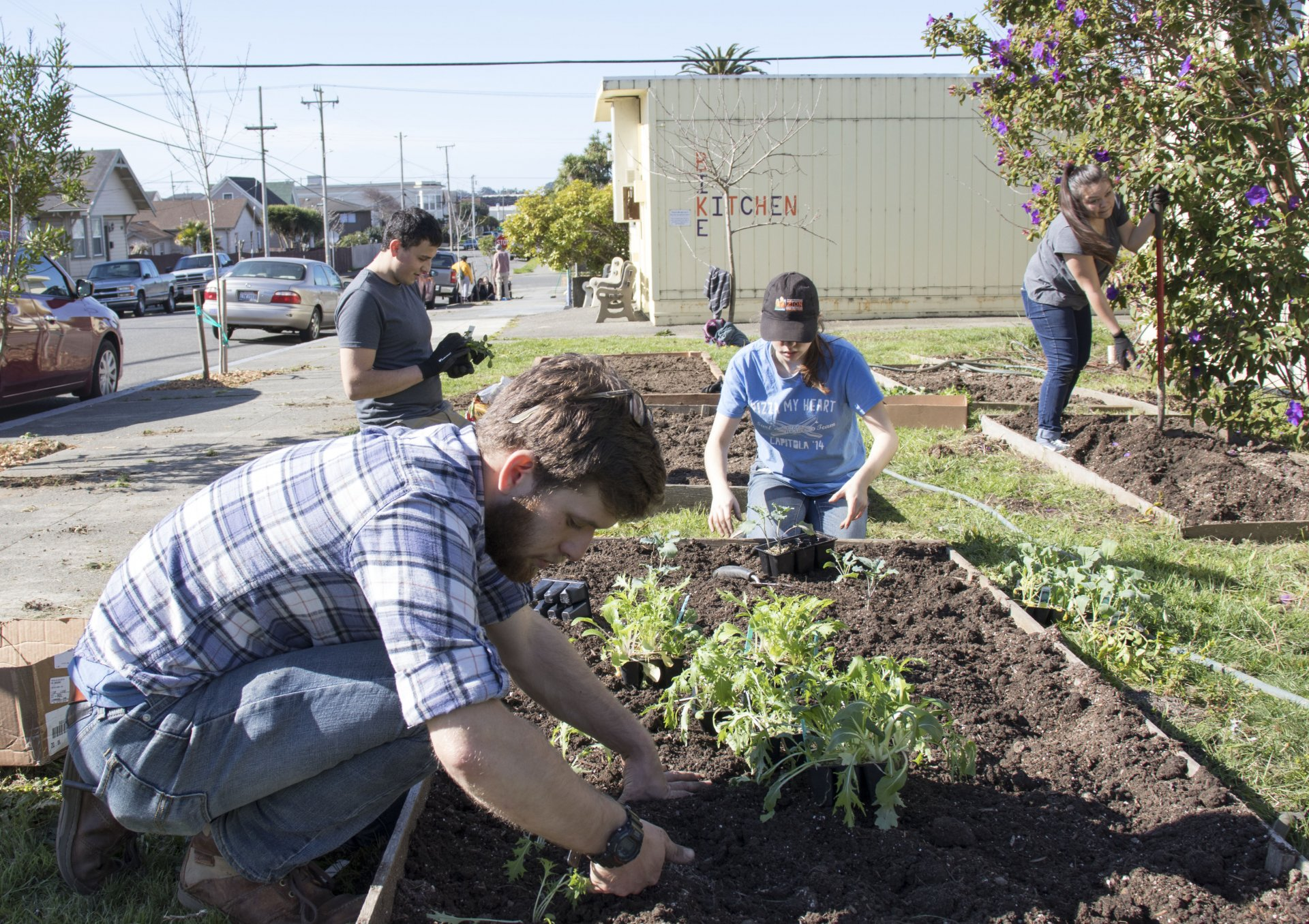 Dean Shearer (foreground), Mike Magana (background), Darby Lawrence (center) and Julia Montes-Muozo (right) planting various vegetables. Photo by Luis Lopez.