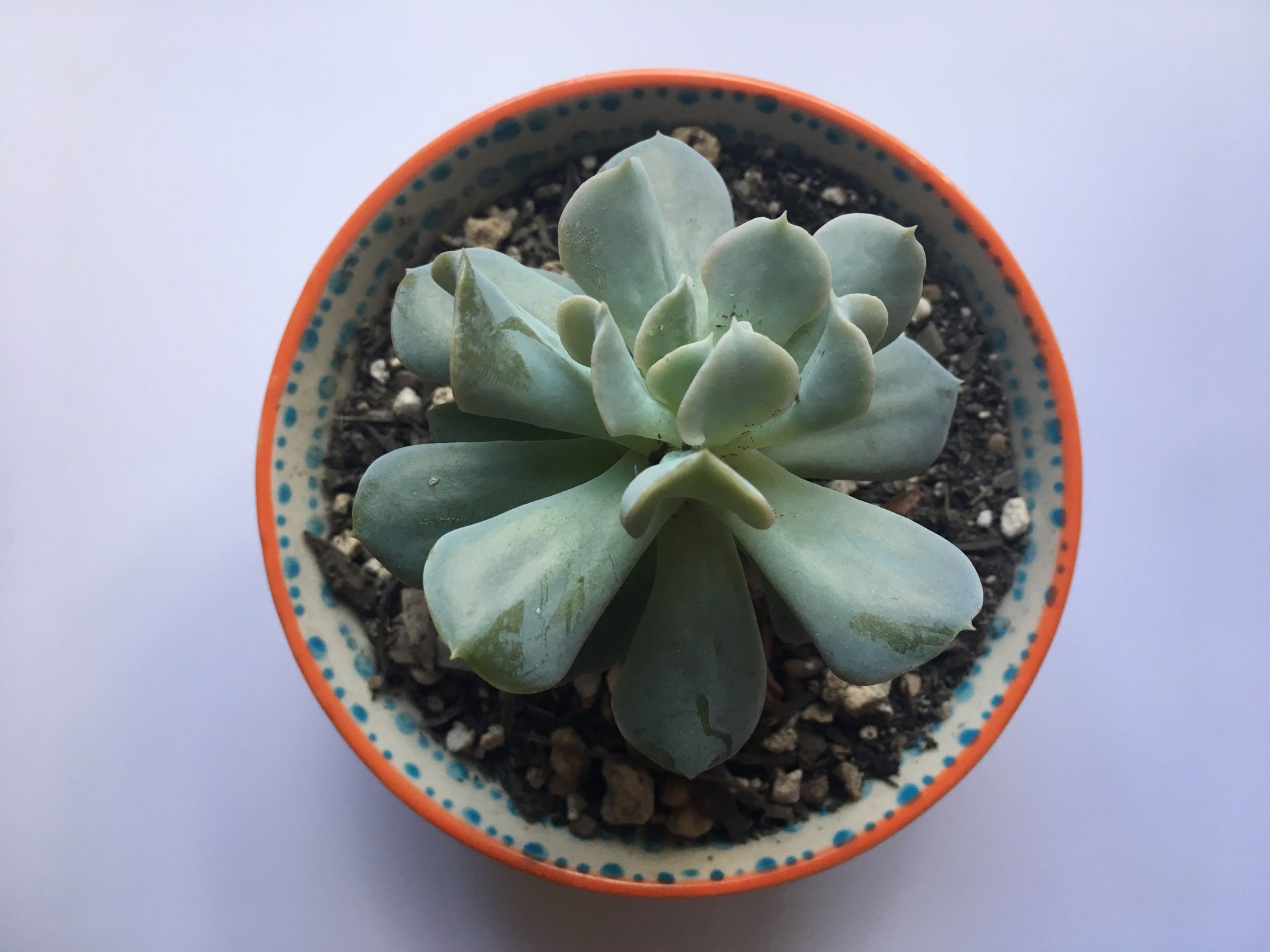 Indoor succulent. Photo | Terra Hyke